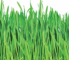 cos e il deflettore dell erba